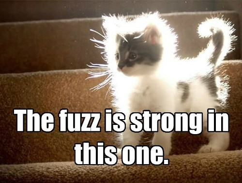 Star Wars Meme Fuzzy Kitten The Force Fuzz is Strong With This one
